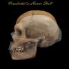 Neanderthal vs Human.png