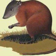 Hypsiprymnodontidae